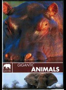 Gigantic Animals